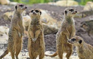 © Tierpark Nordhorn