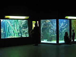 Im Aquarium Du Grand Lyon © Aurelie Chaumat