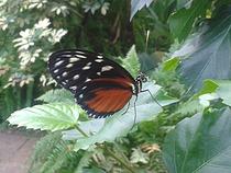 Parkübersicht II: Zoo Emmen