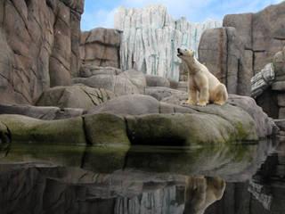 Eisbär im Eismeer © Toni Gunner