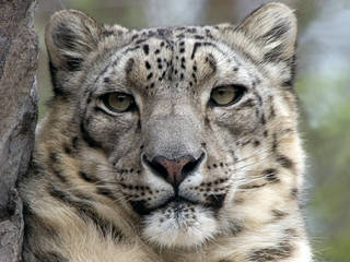 © Lakeland Wildlife Oasis